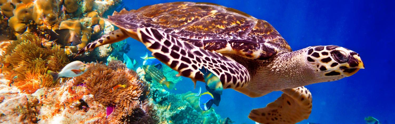Unit-slider-beaute-du-sri-lanka-et-des-maldives-4